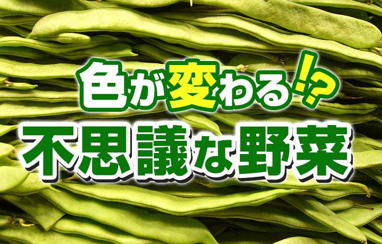 色が変わる不思議な野菜